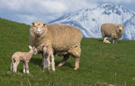 New-Zealand-Queenstown-Fiordland-Farm-1